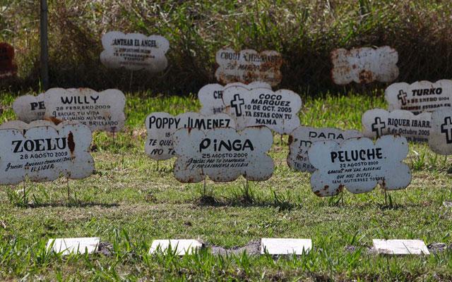 Málaga Aprueba Construir Un Cementerio Para Las Mascotas